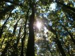3f-lebatnya-hutan.jpg