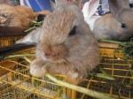 kelinci imut-imut