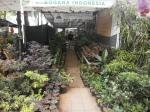 stand tanaman